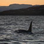 Wenn die Orcas kommen...