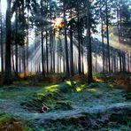 Wenn die Sonne den Frostigen Waldboden küsst