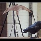 Wenn die Zugvögel weg sind kommen die Blechvögel