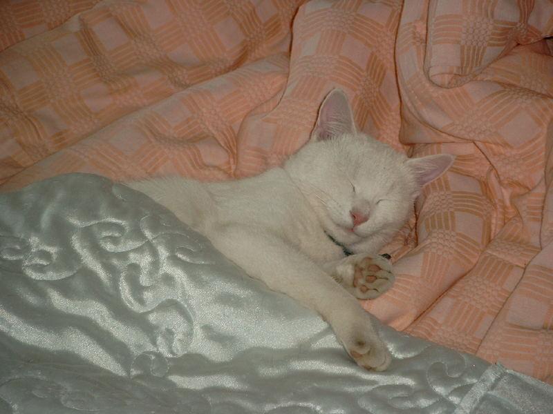 Wenn draußen weiße Flocken fliegen, bleibt Flöckchen d'rin im Bettchen liegen.
