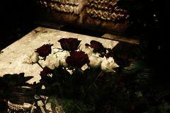 Wenn du eine Rose schaust,...