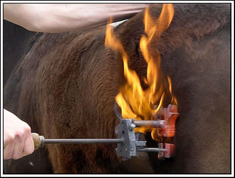 Wenn ein Fohlen brennt .....