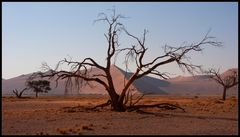 Wenn es Abend wird in der Namib