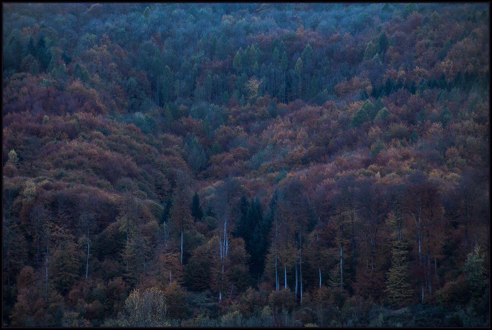 Wenn es Nacht wird am Kandelhang... - oder: Herbstfarben im Blau... (mit Kompositions-Analyse)