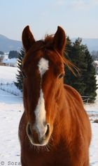 Wenn Gott gewollt hätte, dass Pferde sauber sind, hätte er spüli in den Regen getan.