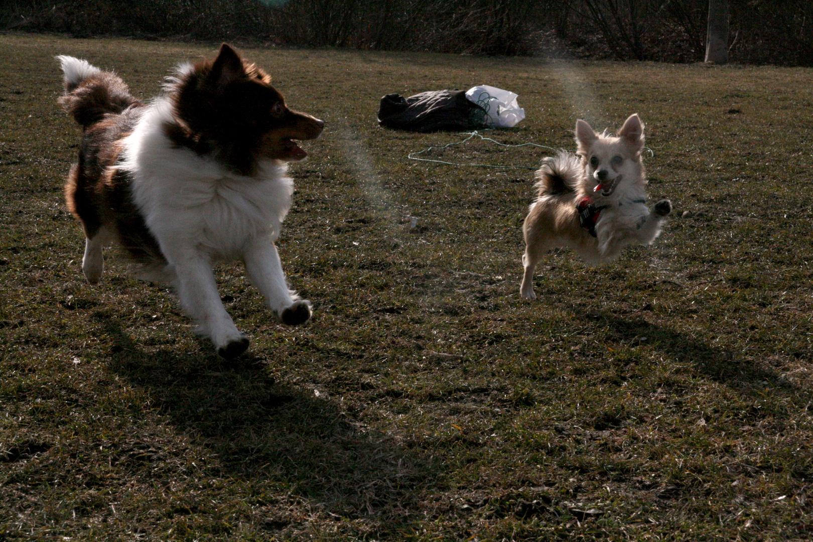 Wenn Hunde fliegen lernen.