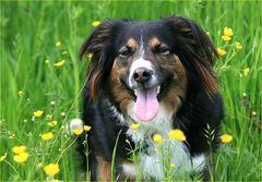 Wenn Hunde lachen....