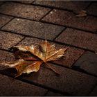 wenn im Herbst die Blätter fallen