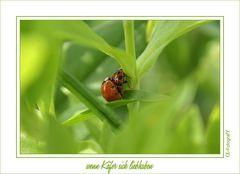 Wenn Käfer sich liebhaben