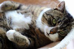 wenn Katzen sprechen könnten