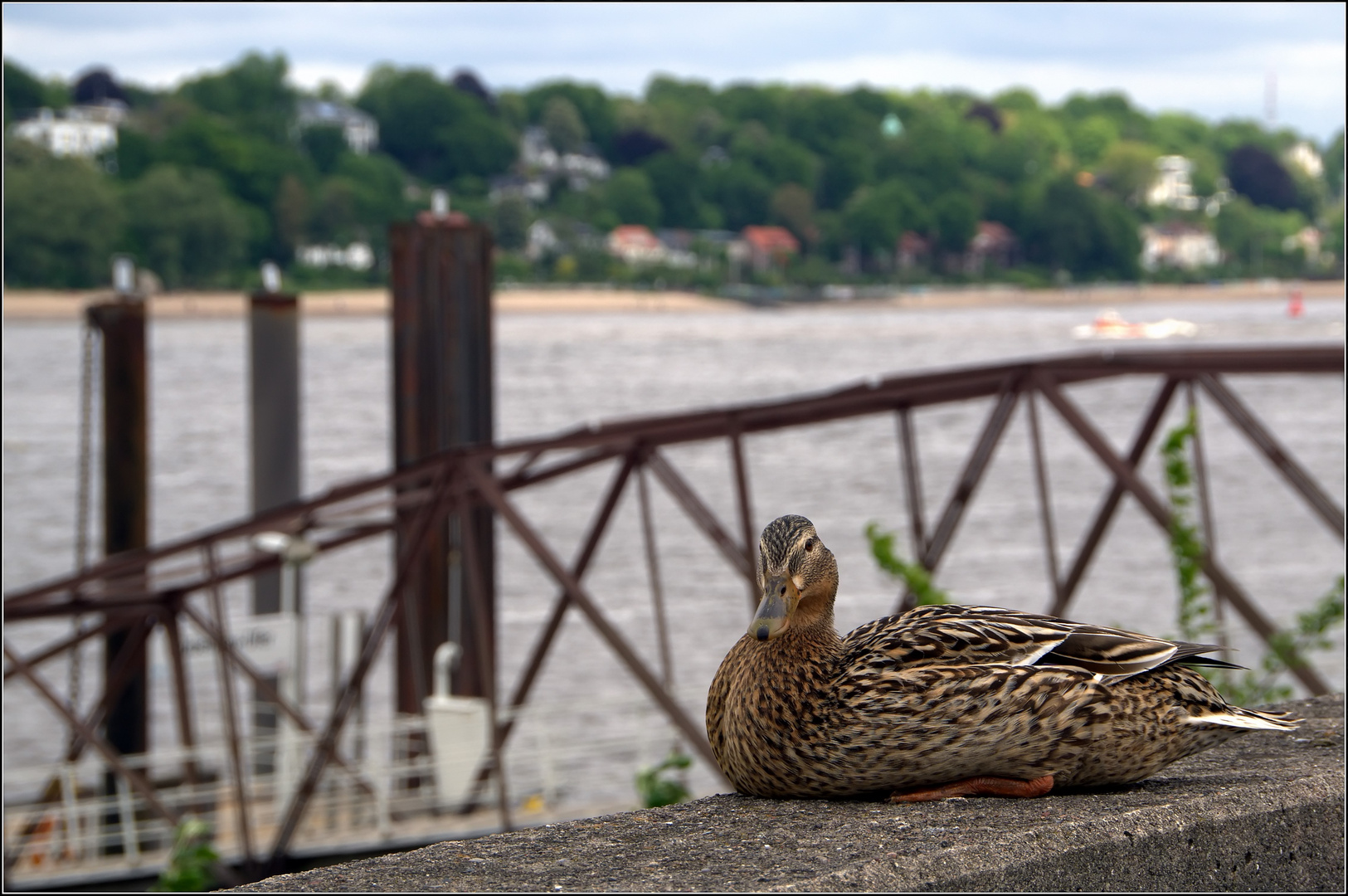 wenn kein Schiff kommt....dann muß eben die Ente dran glauben....:)))