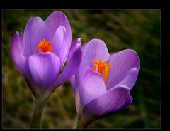 Wenn liebe in jenen Welten Blüht….