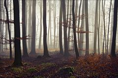 wenn man im Wald steht...