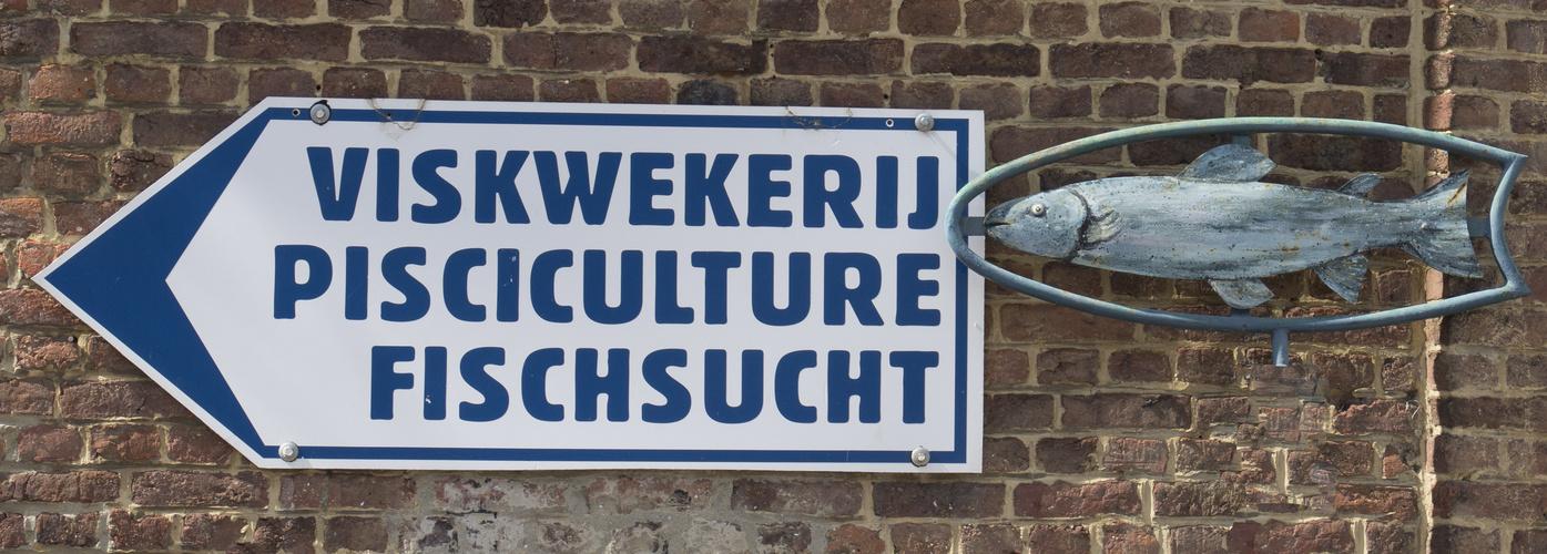 wenn man in einer so multilingualen Gegend