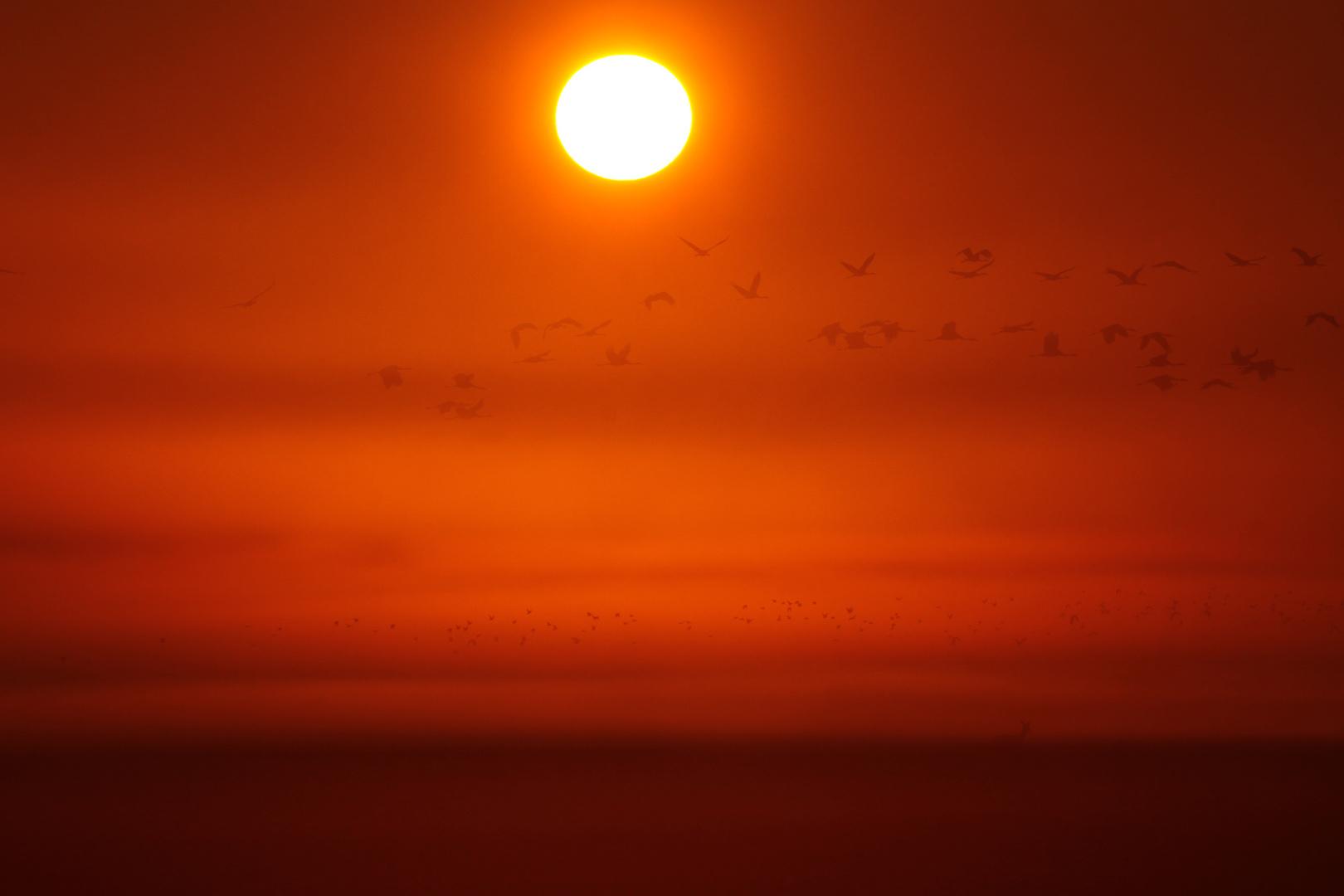 Wenn, Morgensonne und Nebel die Kraniche verschleiern....