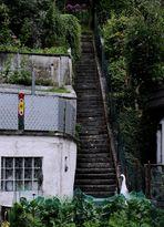 Wenn Reiher Treppen steigen