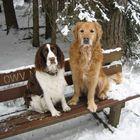 """Wenn schon """"Sitz"""", dann nicht im kalten Schnee!"""