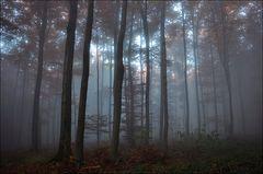 wenn sich der Nebel hebt