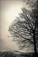 wenn sich der Nebel lichtet