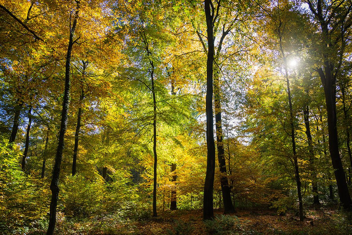 ... wenn Sonnenschein auf bunte Blätter trifft ...