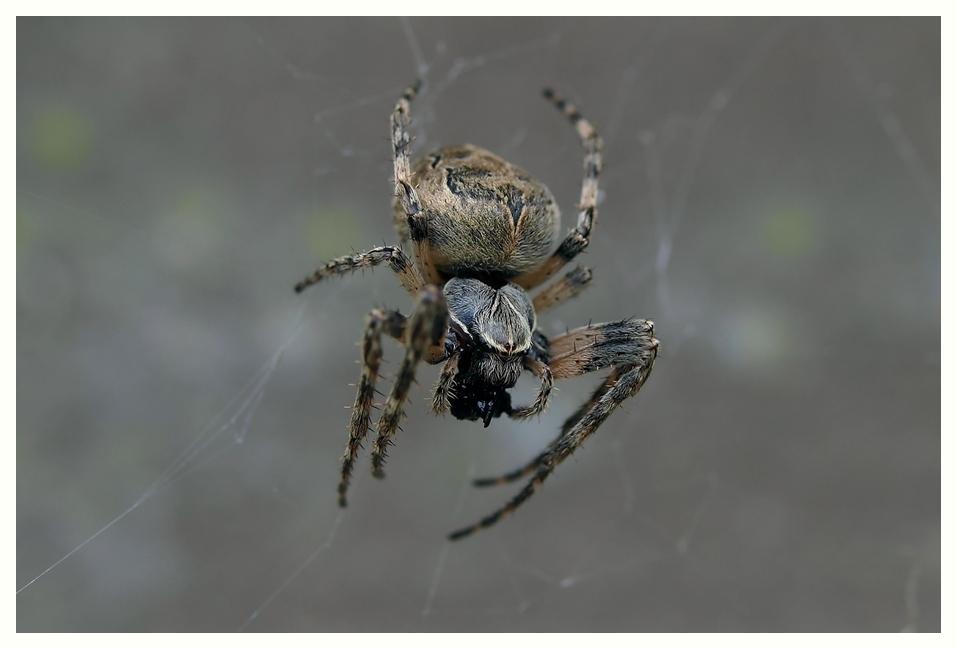 Wenn Spinnen spinnen