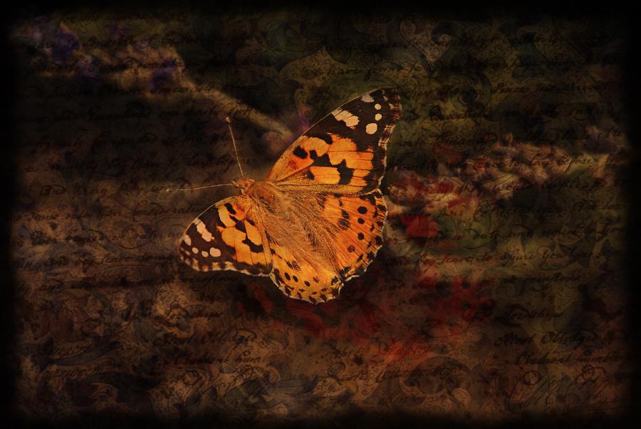 Wenn Träume Flügel haben