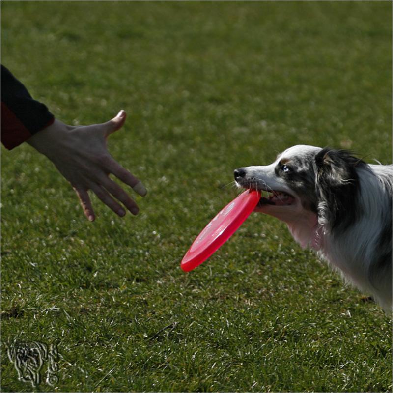 wer erkennt diesen hund?