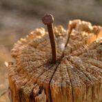 Wer hat das Holz genagelt??