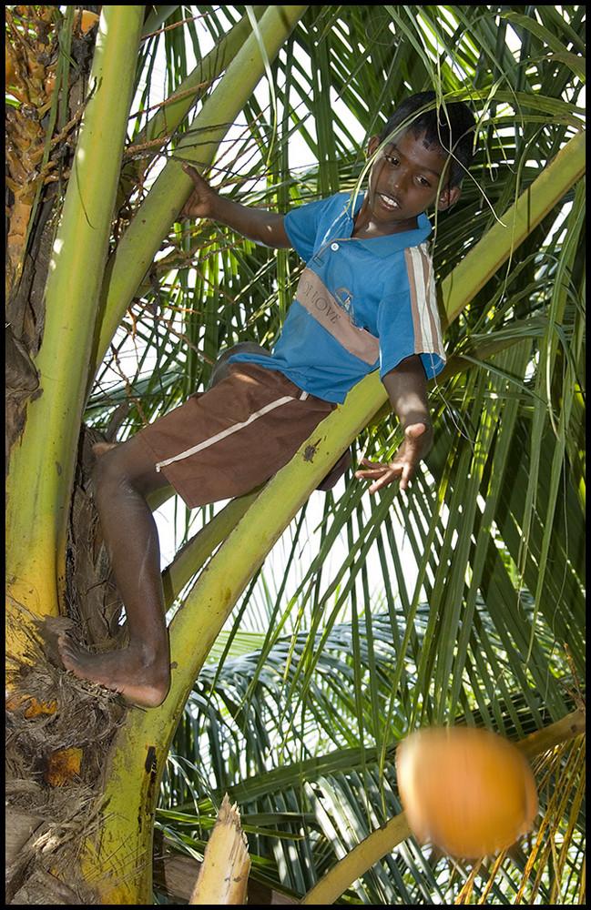 Wer hat die Kokosnuss geklaut....