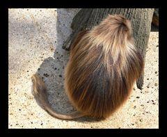 Wer hat die schönste Frisur im Land?