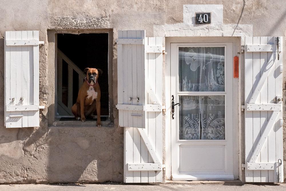 Wer hat hier Hundehütte gesagt?