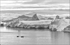 wer in der arktis sucht . . .