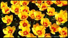 """Wer ist die Schönste hier im Park ? Blütenpracht im """"Gräflicher Park Bad Driburg"""""""