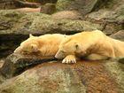 wer ist Knut