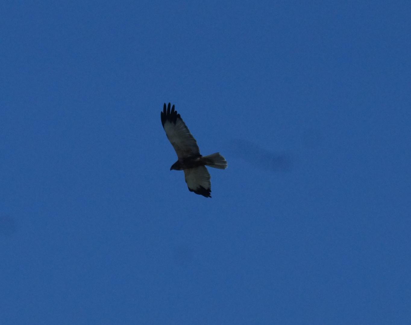 Wer kann diesen Vogel bestimmen?