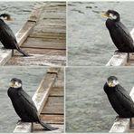 ..wer kennt den Vogel ?..