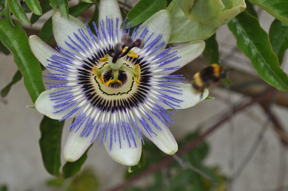 Wer kennt diese Blüte?