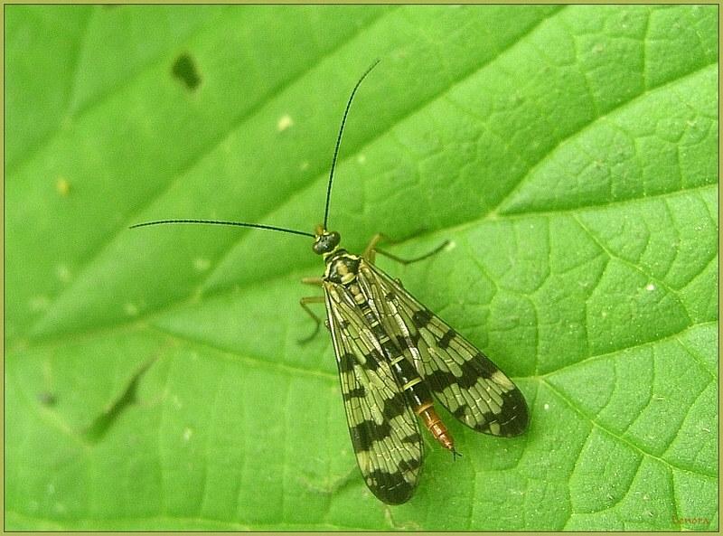 Wer kennt diese Insektenart?