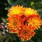 Wer kennt diese Pflanze ?