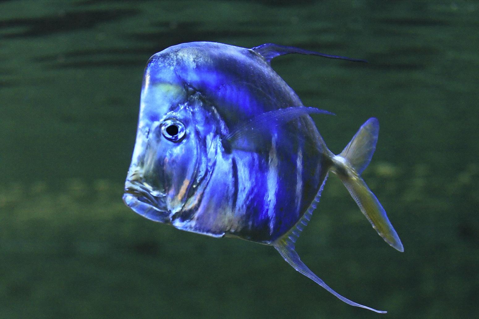 Wer kennt diesen Fisch??