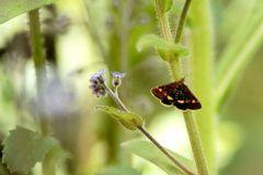 Wer kennt diesen Schmetterling