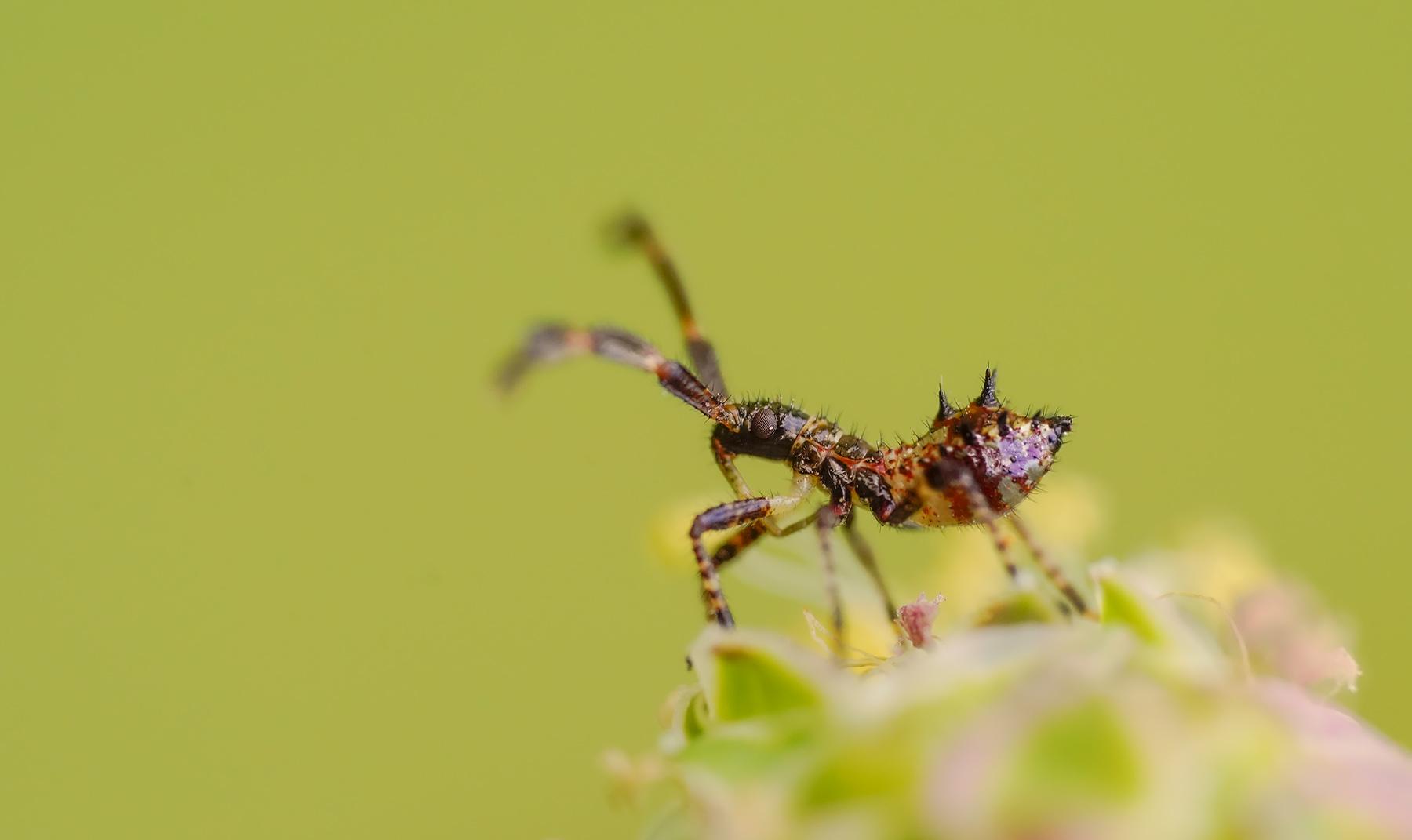 wer kennt dieses insekt ... ???