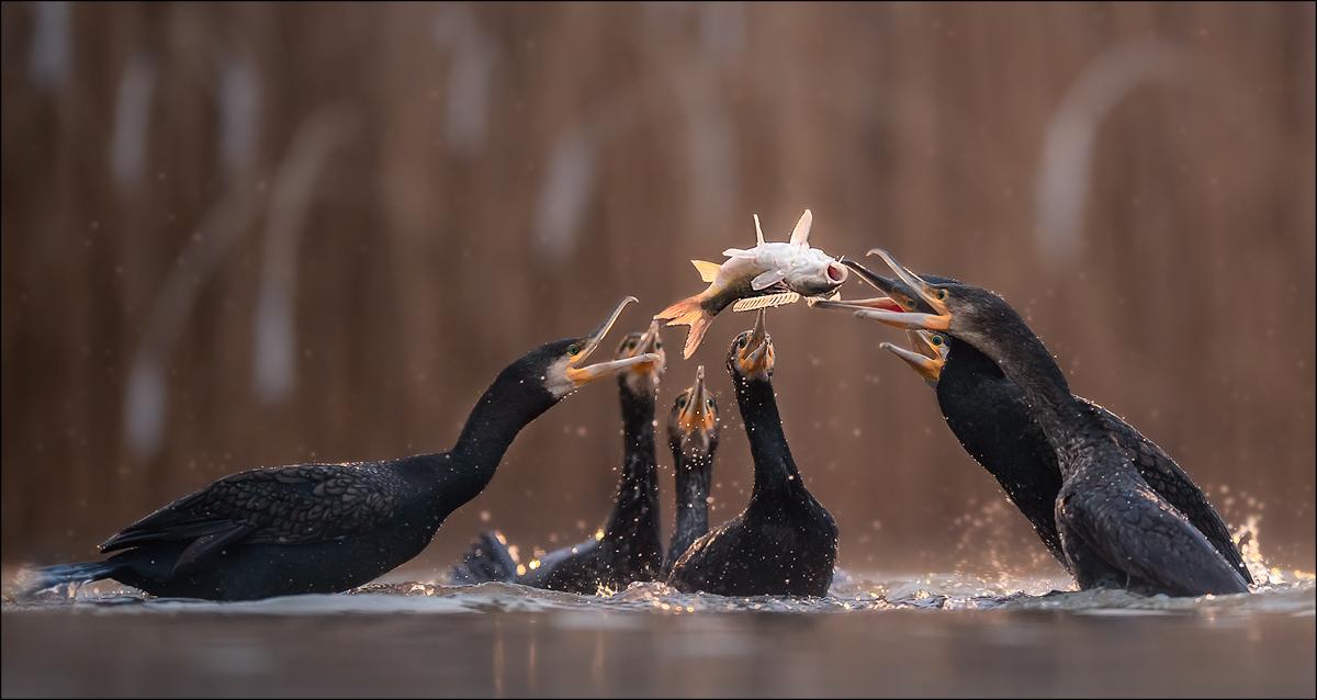 wer kriegt den Fisch