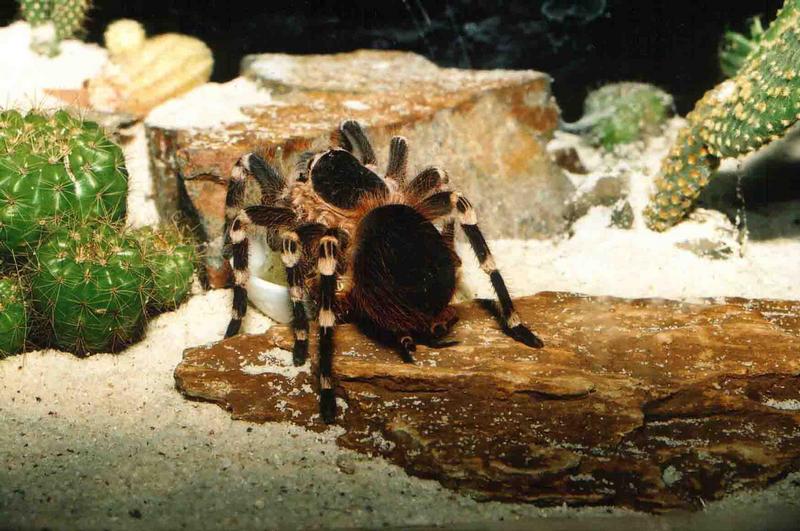 Wer mag Spinne?