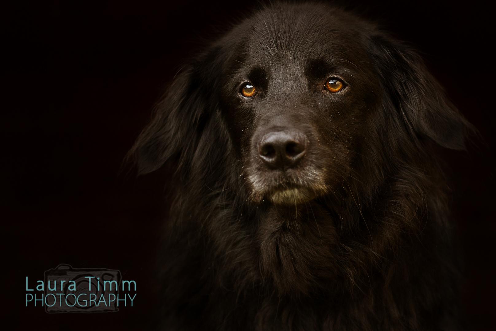 Wer nie einen Hund gehabt hat, weiß nicht, was Lieben und Geliebtwerden heißt. (Arthur Schopenhauer)