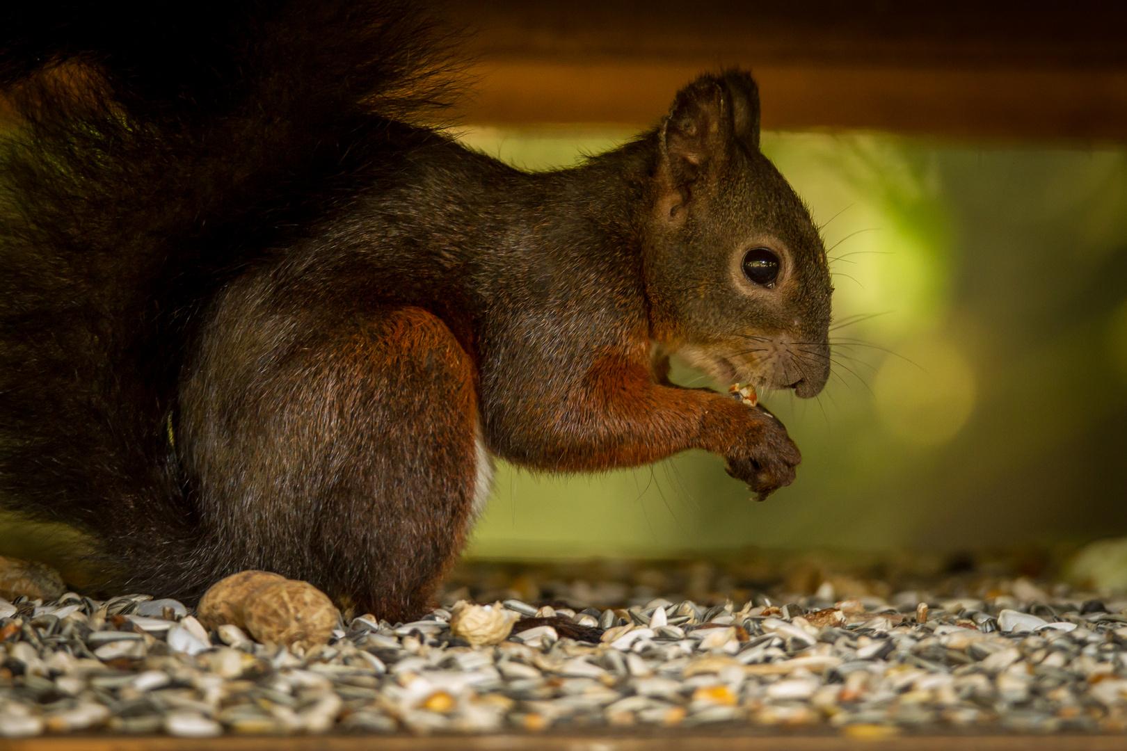 Wer sagt, dass das kein Eichhörnchen-Häuschen ist?