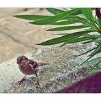 ~ wer sagt, dass Vögel immer davon fliegen ~