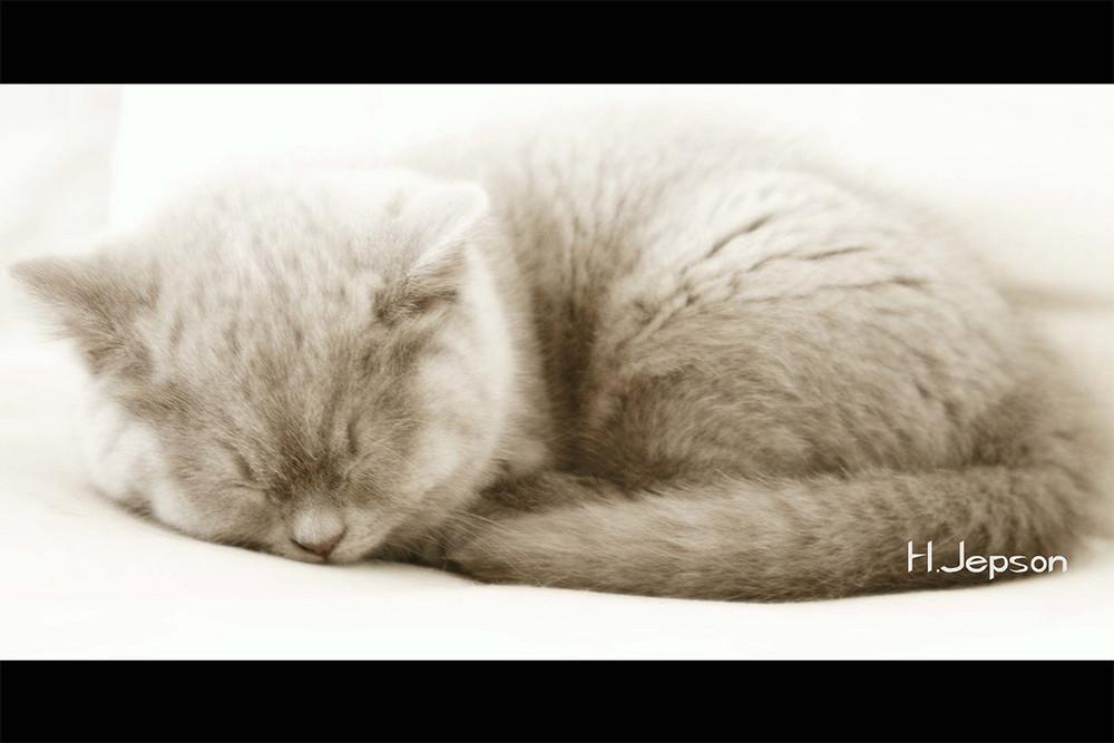 wer schläft sündigt nicht.....