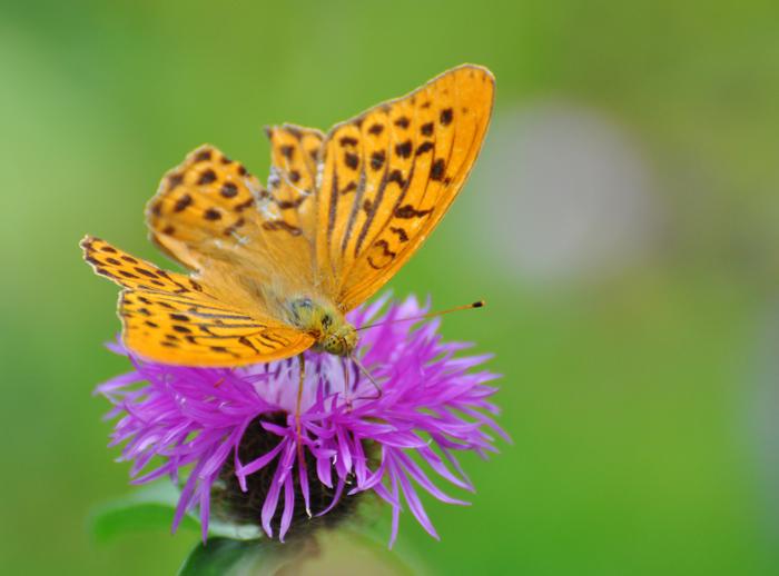 Wer Schmetterlinge lachen hört...