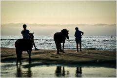 Wer sein Pferd liebt, der .....